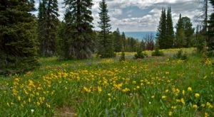 It's Impossible Not To Love This Breathtaking Wild Flower Trail In Idaho