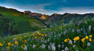 It's Impossible Not To Love This Breathtaking Wild Flower Trail In Utah