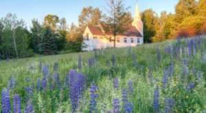 Don't Miss This Breathtaking Lupine Festival In New Hampshire