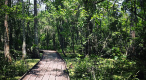 The Hiking Trail Hiding In Louisiana That Will Transport You To Another World