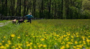 It's Impossible Not To Love This Breathtaking Wildflower Trail In North Carolina