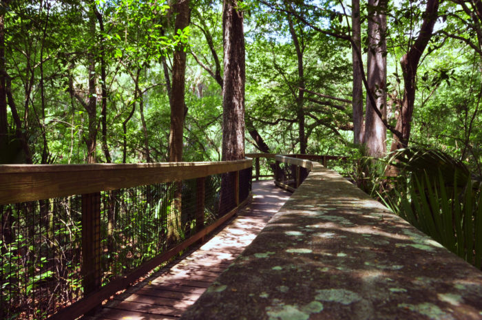 The Hiking Trail Hiding In Florida That Will Transport You To Another World