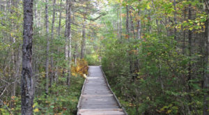 Most People Don't Know There's A Forest Hiding In This Maine City And It's Incredible
