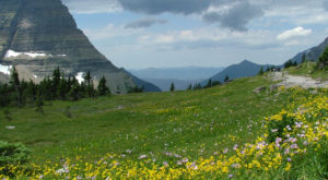 It's Impossible Not To Love This Breathtaking Wild Flower Trail In Montana