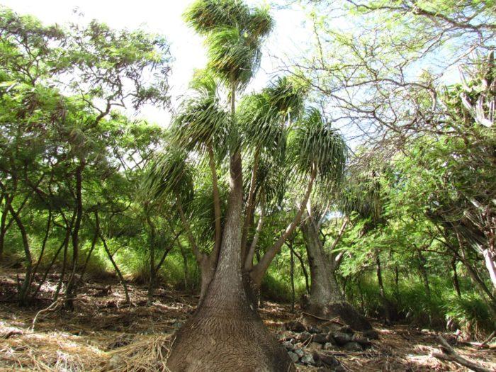 Visiting The Enchanting Koko Crater Botanical Garden
