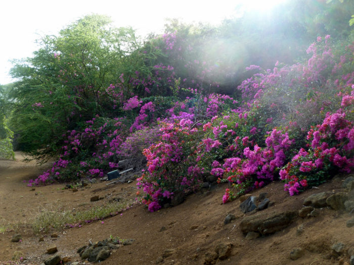 Open Daily From Sunrise To Sunset, The Koko Crater Botanical Garden Is Open  To The Public, And Offers Free Admission.