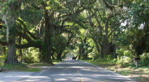 The 7 Best Backroads In South Carolina For A Long Scenic Drive
