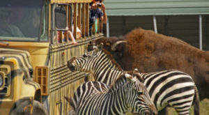 You'll Never Forget A Visit To This One Of A Kind Exotic Animal Ranch In Virginia