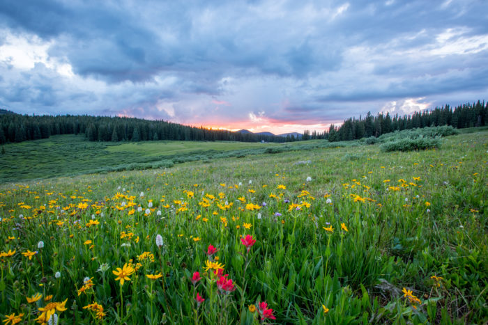 Idaho's Best Wildflower Trails: a Road Trip