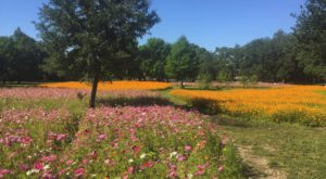 A Trip To New Orleans' Neverending Wildflower Field Will Make Your Spring Complete