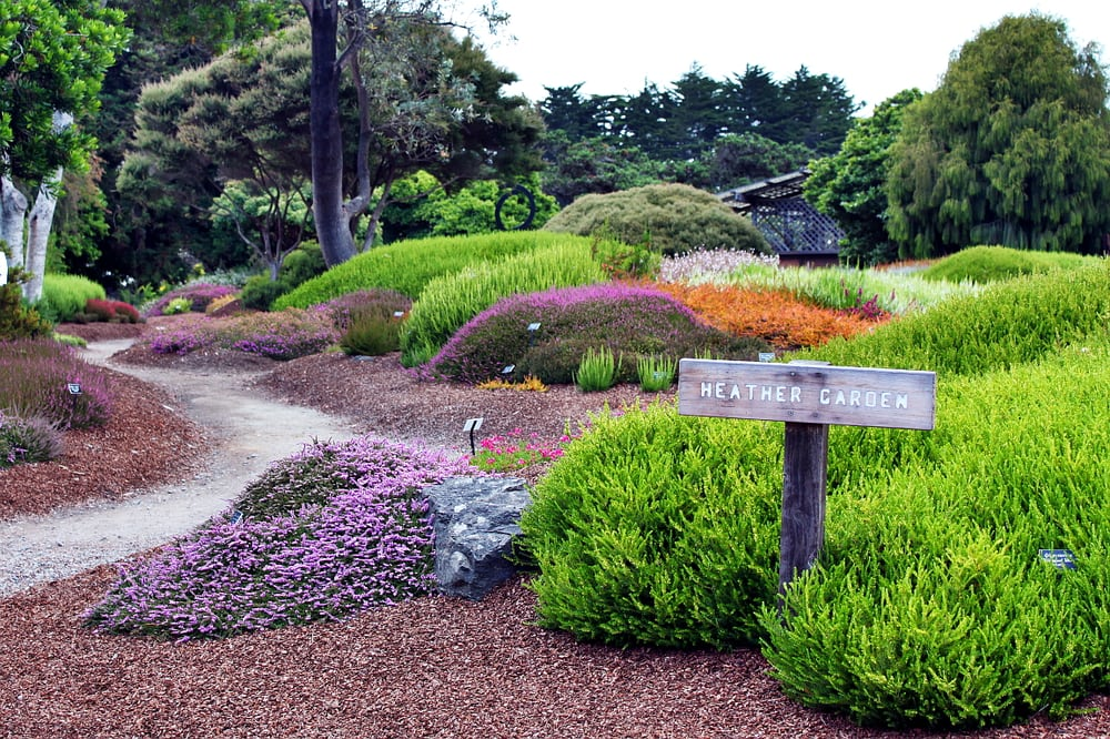 Visit The Mendocino Coast Botanical Gardens In Northern California