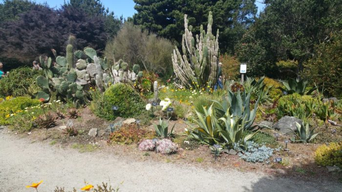 Visit The Mendocino Coast Botanical Gardens In Northern California