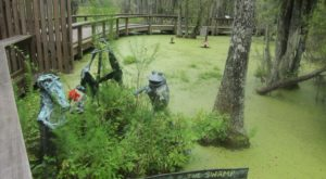 A Trip To South Carolina's Swamp Garden Is Like Visiting The Jungle