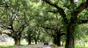 The 7 Best Backroads In Louisiana For A Long Scenic Drive