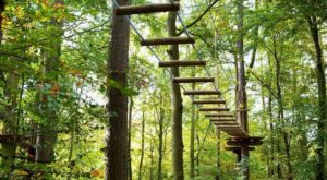 7 Amazing Treetop Adventures You Can Only Have In Connecticut