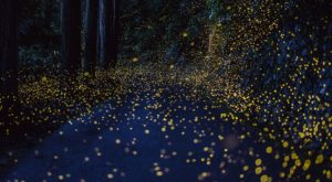 The Virginia Firefly Festival That'll Enchant You In The Best Way Possible
