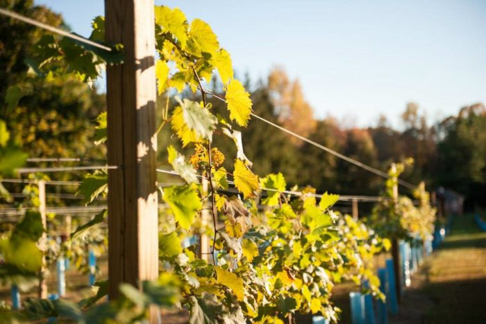 Tour Four Virginia Wineries On The Trolley Tours Of