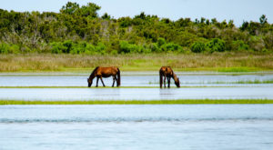 2 Magical Places In North Carolina To Find Wild Horses This Summer
