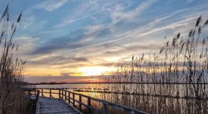 These 10 Virginia Parks Also Have Beaches And You'll Want To Visit