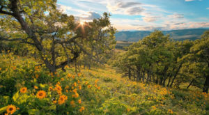 It's Impossible Not To Love This Breathtaking Wild Flower Trail In Oregon