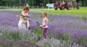 The Beautiful Lavender Farm Hiding In Plain Sight Near Cleveland That You Need To Visit