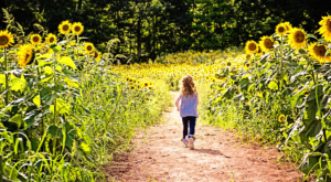 Most People Don't Know About This Magical Sunflower Field Hiding In New Hampshire