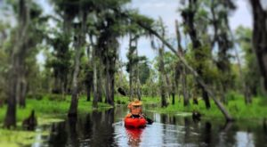 5 Perfect Places To Kayak And Canoe Around New Orleans This Summer