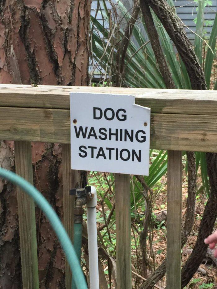 Dog Friendly Beach Rentals Kiawah Sc