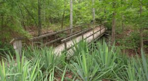 A Hike Along This Serene Trail Hiding In Alabama Is The Perfect Way To Spend A Summer Day