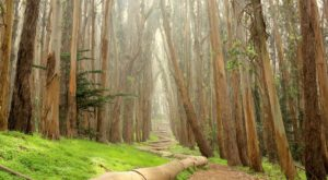 The San Francisco Park That Will Make You Feel Like You Walked Into A Fairy Tale