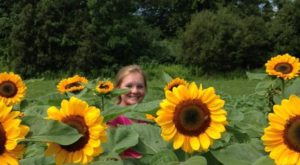 Most People Don't Know About This Magical Sunflower Field Hiding In Rhode Island