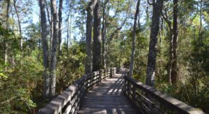 The One Nature Reserve In Alabama Everyone Should Visit This Summer