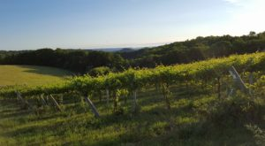 Take The Southwest Wisconsin Wine Trail For An Unforgettable Experience