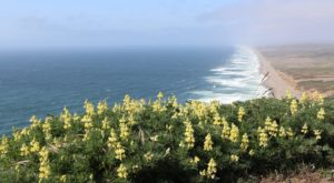 It's Impossible Not To Love This Breathtaking Wild Flower Trail Near San Francisco