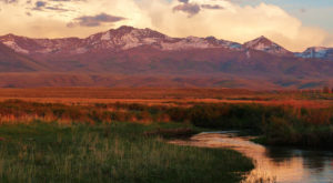 There's A Gorgeous Forest Hiding In The Middle Of Nevada's Very Own Alps And You'll Want To Find It