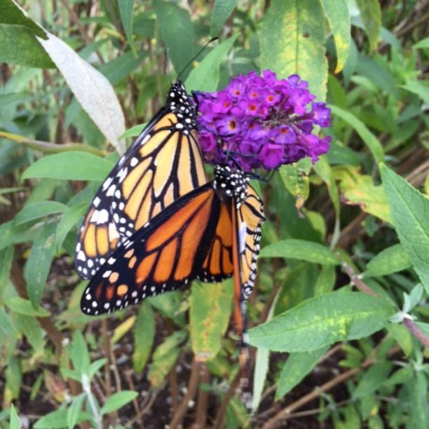 Rhoades Butterfly Garden / Facebook