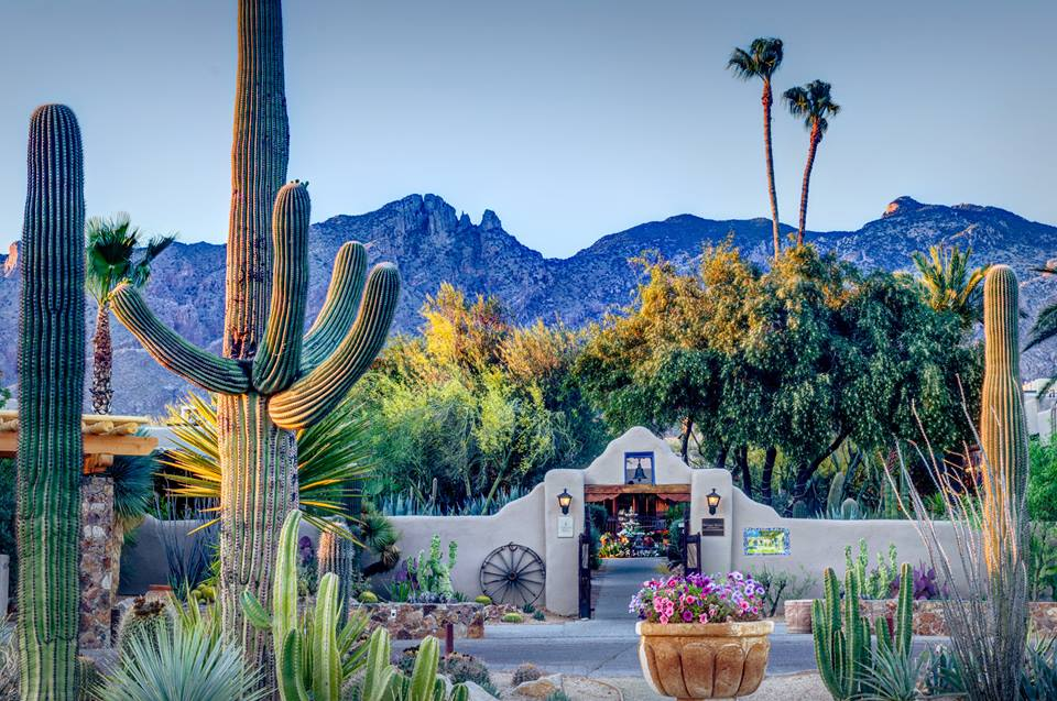 8 Beautiful Hotels In Arizona You Will Love
