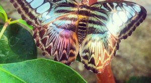 You'll Want To Plan A Day Trip To Missouri's Magical Butterfly House