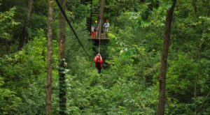 This Canopy Tour In Wisconsin Will Thrill Adventurers Of All Ages