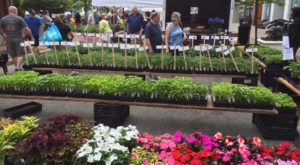 Everyone In Cleveland Must Visit This Epic Farmers Market At Least Once