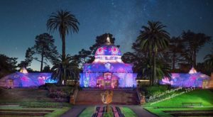 You've Never Seen Anything Like This Amazing Flower Show In San Francisco