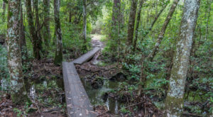 If There Are Only 5 Hikes You Ever Do In Mississippi, Make Them These