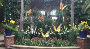 You'll Want To Plan A Day Trip To Pittsburgh's Magical Butterfly House