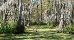The 8 Most Incredible Natural Attractions Near New Orleans That Everyone Should Visit