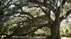 This Just Might Be the Most Breathtaking Spot in all of New Orleans