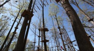 5 Amazing Treetop Adventures You Can Only Have In Maryland