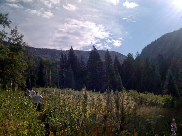 5 Best Places To Pick Huckleberries In Idaho