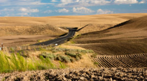 You'll Never Guess How These Picturesque Rolling Hills In Idaho Were Made