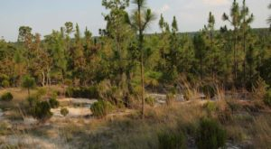 The One Incredible Sand Dune Every South Carolinian Must Explore