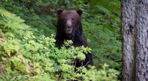 The Story Behind This 11-Year-Old's Bear Encounter In Alaska Is Downright Terrifying